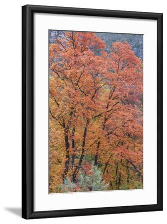 USA, Texas, Guadalupe Mountains NP. Scenic of McKittrick Canyon-Don Paulson-Framed Photographic Print