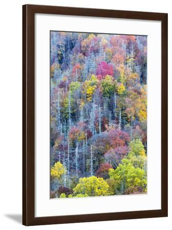 Tennessee, Great Smoky Mountains NP, View Along Newfound Gap Road-Jamie & Judy Wild-Framed Photographic Print