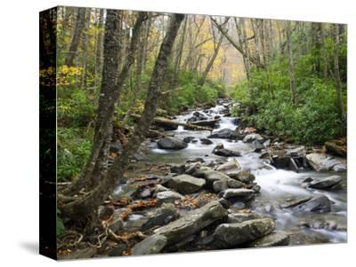 Tennessee, Great Smoky Mountains National Park, Alum Cave Creek-Jamie & Judy Wild-Stretched Canvas Print