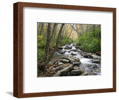 Tennessee, Great Smoky Mountains National Park, Alum Cave Creek-Jamie & Judy Wild-Framed Photographic Print
