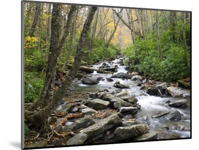 Tennessee, Great Smoky Mountains National Park, Alum Cave Creek-Jamie & Judy Wild-Mounted Photographic Print