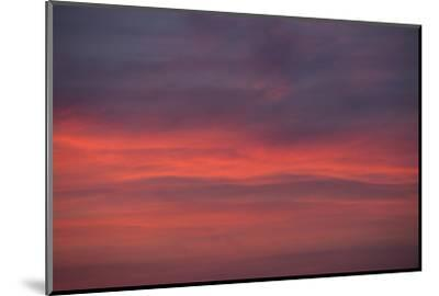 Altocumulus and Cirrus Clouds in the Evening Light-Greg Probst-Mounted Photographic Print
