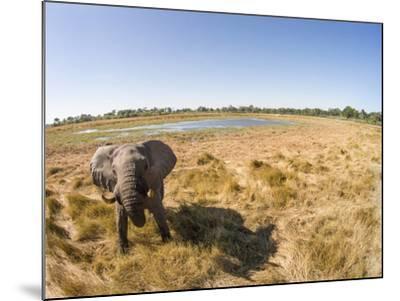 Botswana, Moremi Game Reserve, Elephant in Wetlands of Okavango Delta-Paul Souders-Mounted Photographic Print