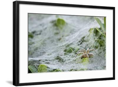 Sheet Spiders with Webs, Los Angeles, California-Rob Sheppard-Framed Photographic Print