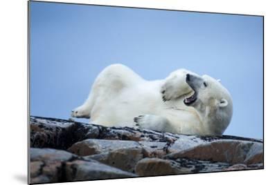 Canada, Nunavut Territory, Repulse Bay, Male Polar Bear Yawning-Paul Souders-Mounted Photographic Print