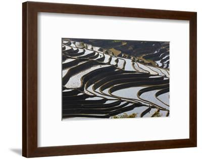 Reflections Off Water Filled Rice Terraces, Yuanyang, Honghe, China-Peter Adams-Framed Photographic Print