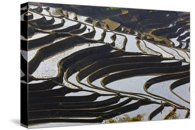 Reflections Off Water Filled Rice Terraces, Yuanyang, Honghe, China-Peter Adams-Stretched Canvas Print