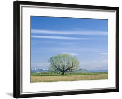 Utah. USA. Willow Tree and Cirrus Clouds in Spring. Cache Valley-Scott T^ Smith-Framed Photographic Print