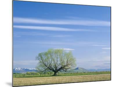 Utah. USA. Willow Tree and Cirrus Clouds in Spring. Cache Valley-Scott T^ Smith-Mounted Photographic Print