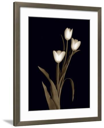 Sepia Tulips-Anna Miller-Framed Photographic Print