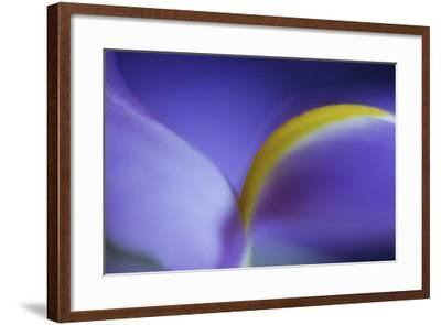 Iris Abstract-Anna Miller-Framed Photographic Print