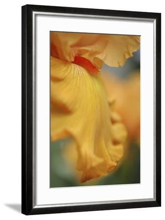 Iris Abstract-Anna Miller-Framed Photographic Print