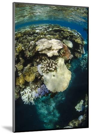 Coral Reef Diversity, Fiji-Pete Oxford-Mounted Premium Photographic Print