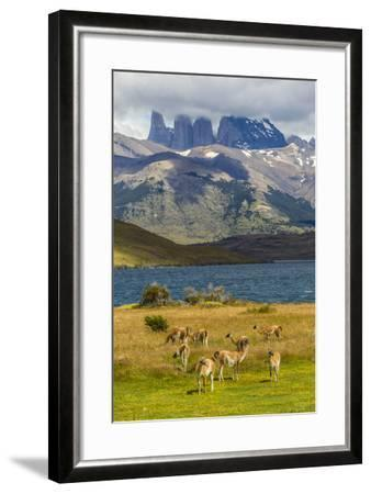 Chile, Patagonia, Torres del Paine NP. Mountains and Guanacos-Cathy & Gordon Illg-Framed Photographic Print