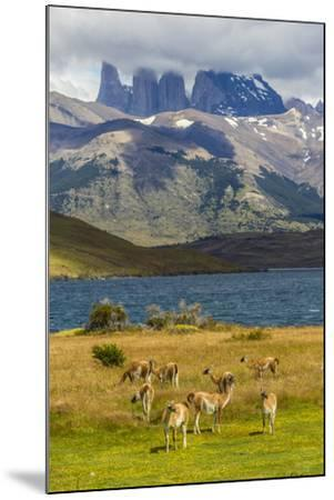Chile, Patagonia, Torres del Paine NP. Mountains and Guanacos-Cathy & Gordon Illg-Mounted Photographic Print