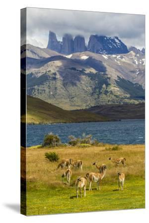 Chile, Patagonia, Torres del Paine NP. Mountains and Guanacos-Cathy & Gordon Illg-Stretched Canvas Print