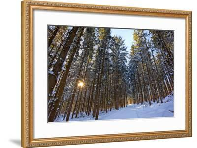 Cross-Country Ski Trail in a Spruce Forest, Windsor, Massachusetts-Jerry & Marcy Monkman-Framed Photographic Print