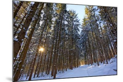 Cross-Country Ski Trail in a Spruce Forest, Windsor, Massachusetts-Jerry & Marcy Monkman-Mounted Photographic Print