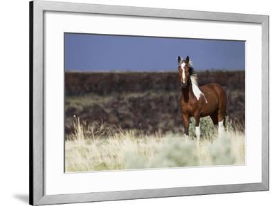Wild Horse, Steens Mountains-Ken Archer-Framed Photographic Print