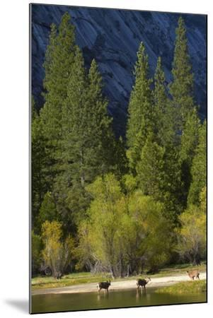 Mule Deer by Mirror Lake, Tenaya Canyon, Yosemite NP, California-David Wall-Mounted Photographic Print