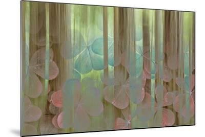 USA, Washington State, Seabeck. Collage of Oxalis and Trees-Don Paulson-Mounted Photographic Print