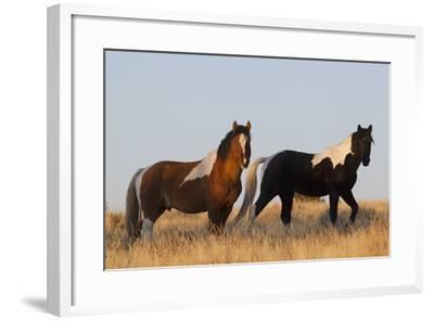 Wild Horses, Steens Mountains-Ken Archer-Framed Photographic Print