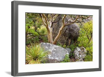 USA, Texas, Guadalupe Mountains NP. Scenic with Texas Madrona Tree-Don Paulson-Framed Photographic Print
