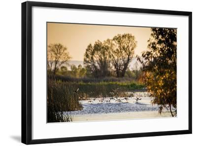 California, Gray Lodge Waterfowl Management Area, at Butte Sink-Alison Jones-Framed Photographic Print