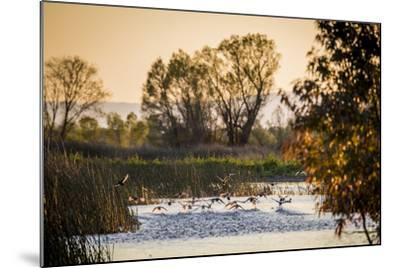 California, Gray Lodge Waterfowl Management Area, at Butte Sink-Alison Jones-Mounted Photographic Print