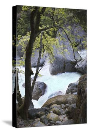 Yosemite National Park, Wyoming, USA. Intimate River Scene-Janet Muir-Stretched Canvas Print