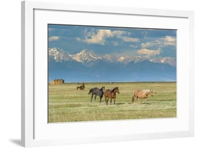 Heard of Horses in Hayfield, San Luis Valley-Howie Garber-Framed Photographic Print