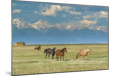 Heard of Horses in Hayfield, San Luis Valley-Howie Garber-Mounted Photographic Print