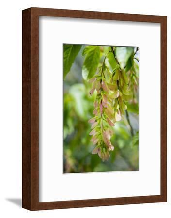Cluster Flowers Vertical-Sheila Haddad-Framed Photographic Print