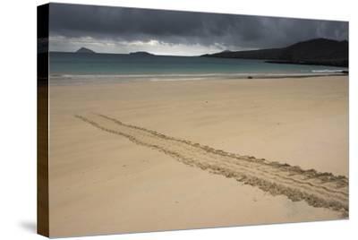 Galapagos Green Sea Turtle Tracks. Floreana Island, Galapagos, Ecuador-Pete Oxford-Stretched Canvas Print