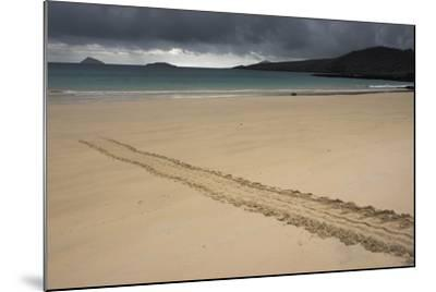 Galapagos Green Sea Turtle Tracks. Floreana Island, Galapagos, Ecuador-Pete Oxford-Mounted Photographic Print