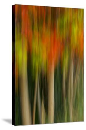 Washington, Walla Walla. Whitman Mission. Smooth Sumac in Fall Colors-Brent Bergherm-Stretched Canvas Print