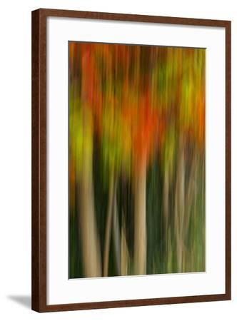 Washington, Walla Walla. Whitman Mission. Smooth Sumac in Fall Colors-Brent Bergherm-Framed Photographic Print