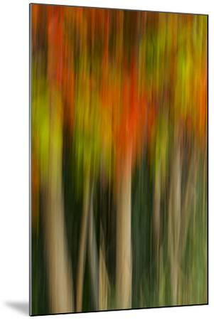 Washington, Walla Walla. Whitman Mission. Smooth Sumac in Fall Colors-Brent Bergherm-Mounted Photographic Print