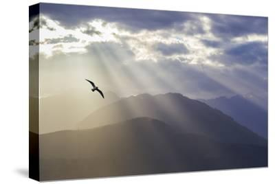 Washington, Seabeck. Seagull and God Rays over the Olympic Mountains-Don Paulson-Stretched Canvas Print