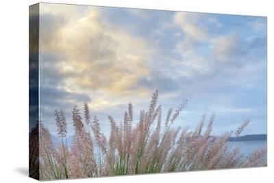 Washington State, Seabeck. Scenic of Pennisetum Ornamental Grasses-Don Paulson-Stretched Canvas Print