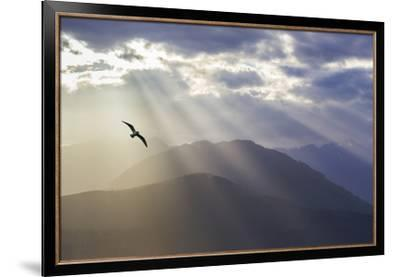 Washington, Seabeck. Seagull and God Rays over the Olympic Mountains-Don Paulson-Framed Premium Photographic Print