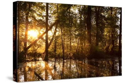 Sunrays Shine Through Trees at Sunrise in Western Montana-James White-Stretched Canvas Print