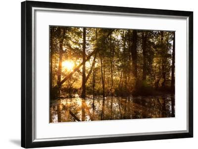 Sunrays Shine Through Trees at Sunrise in Western Montana-James White-Framed Photographic Print