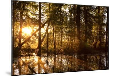 Sunrays Shine Through Trees at Sunrise in Western Montana-James White-Mounted Photographic Print