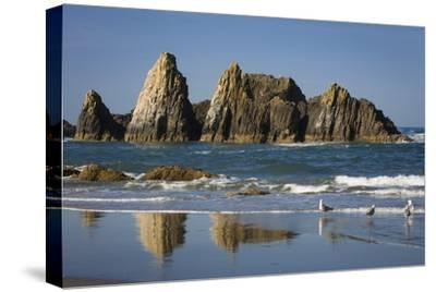Rocks Along the Coastline at Seal Rock Beach, Oregon, USA-Brian Jannsen-Stretched Canvas Print