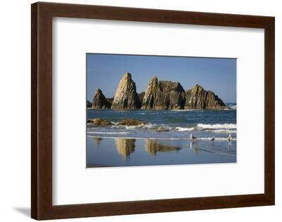 Rocks Along the Coastline at Seal Rock Beach, Oregon, USA-Brian Jannsen-Framed Photographic Print