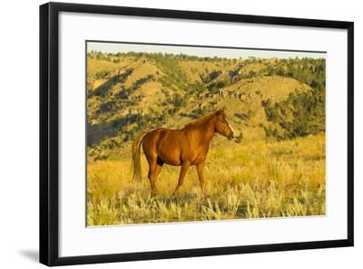USA, South Dakota, Wild Horse Sanctuary. Wild Horse in Field-Cathy & Gordon Illg-Framed Photographic Print