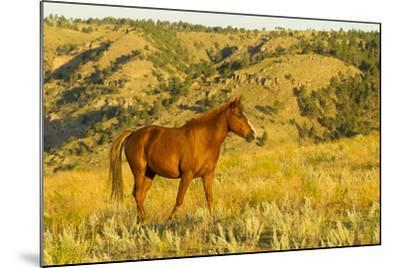 USA, South Dakota, Wild Horse Sanctuary. Wild Horse in Field-Cathy & Gordon Illg-Mounted Photographic Print