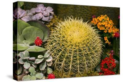 New York City, NY, USA. Floral Displays for Spring-Julien McRoberts-Stretched Canvas Print