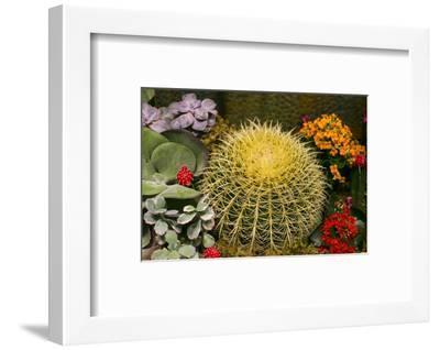 New York City, NY, USA. Floral Displays for Spring-Julien McRoberts-Framed Photographic Print